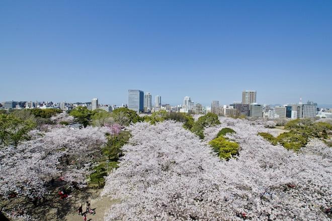 舞鶴公園の桜並木