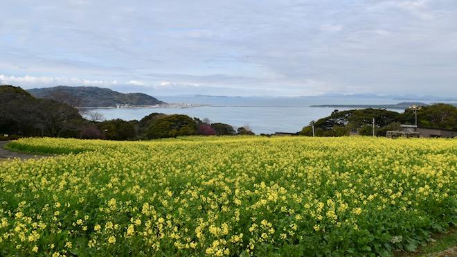 ほとめくかかし1巻 第1話 ほとめく島 (扉絵)3月は菜の花が見頃-のこのしまアイランドパーク
